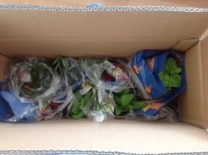 Dodávka speciálních bylinek ze zahradnictví Jikl. Bohužel mě při vybalování (faktury) přistihl Ópa!