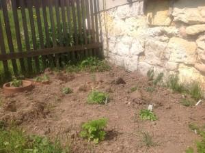 Čerstvě založený bylinkový záhon u domu.