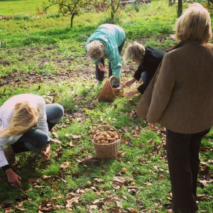 Tři generace žen z D. při společném sběru podzimních plodů. Foto: Sláma v botách