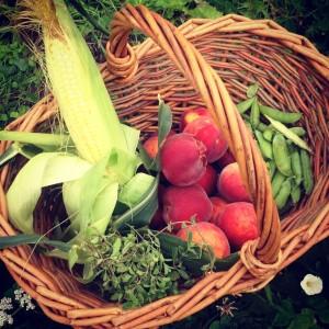 Zleva: majoránka, kukuřice, broskve, hrášek. Foto: Sláma v botách