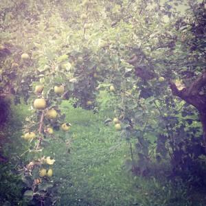 Cesta k mým záhonům vede touto jablečnou bránou obsypanou. Foto: Sláma v botách