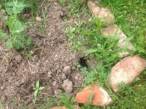 Zahradní underground! Záhony (tady konkrétně mák) prošpikované dírami, v nichž už zahučela nejedna sazenice. Kočky na vás! Foto: Sláma v botách