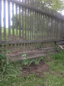 Náš krásný plot zkouším kulturně povznést o level výše vysázením okrasných dýní. Foto: Sláma v botách