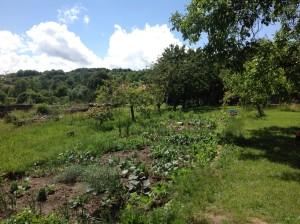 Zahrada je moje láska, ale v divokých rostlinách vidím budoucnost. Obzvlášť když mi letos slimáci (skoro) všechno sežrali... Foto: Sláma v botách