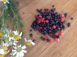 Heřmánek, lesní jahody a borůvky, úlovky z půli června. Foto: Sláma v botách