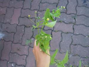 Fešák pěťour. Tohohle jsem ulovila na zahradě u rodičů v K. Foto: Sláma v botách