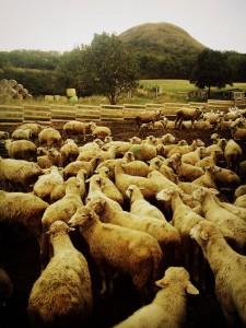Ovce, Oblík a krásná fotka z jiného výletu na tohle krásné místo. Fotila tehdymá bezvadná biosousedka Kate Du (o ní ZDE). Foto: Kate Du.