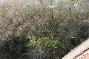 Pohled na pozemek ze střechy stodoly. Foto: Sláma v botách