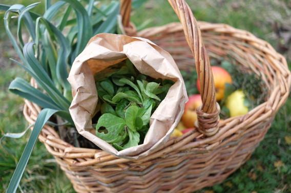 Co se dá sklízet v únoru? Polníček, pórek, první bylinky (a ze sklepa vytáhnout jablka). Foto: Sláma v botách