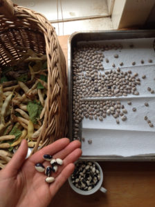 na facebooku všechno vypadá jednoduše. A zatím jsem koše fazolí loupala ještě na silvestra. Foto: Sláma v botách