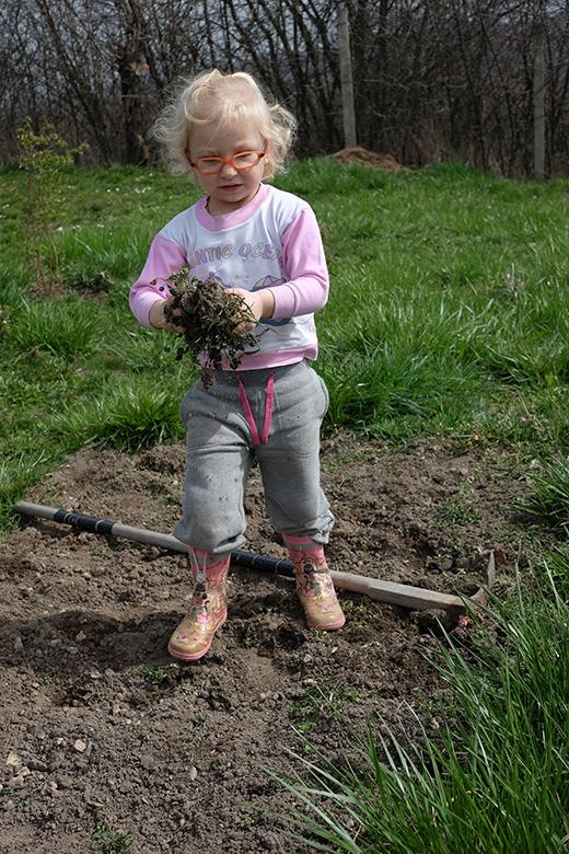 Pracovitější plečku byste pohledali. A dokonce s dospělou motykou! (Malý trik, záhon jsem ještě před nástupem dcery rychle vyplečkovala, aby jí to vykopávání plevelů šlo dobře od ruky. A bavilo ji. Foto: Sláma v botách